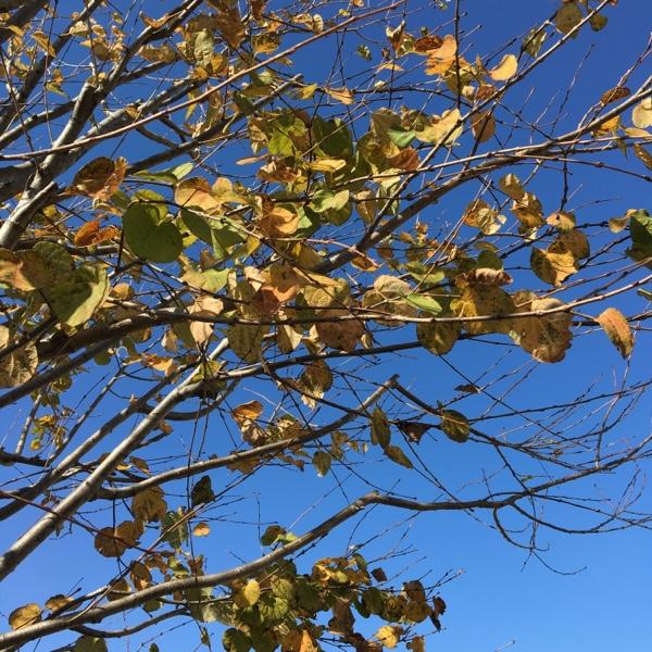 紅葉した木と空